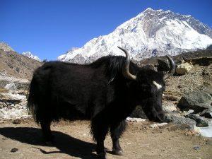 aventure au Népal
